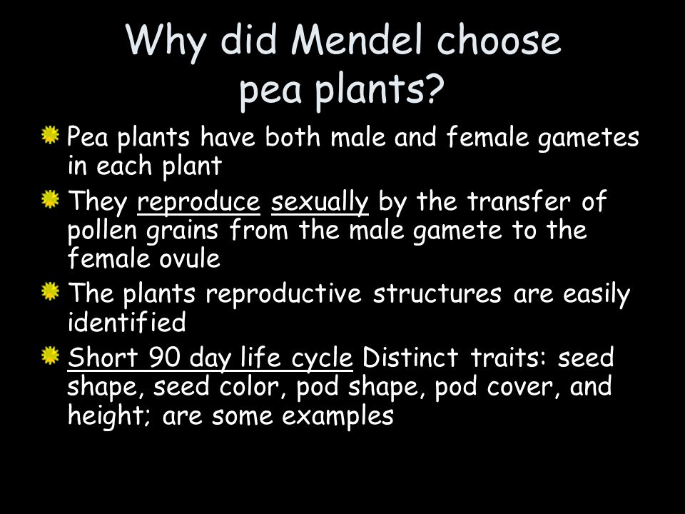 Why did Mendel choose pea plants