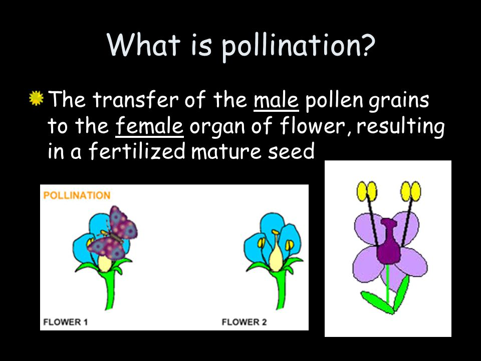 What is pollination.