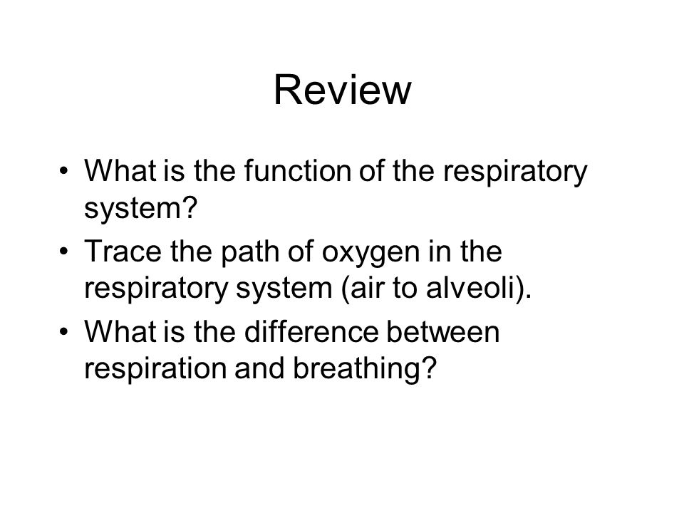 Review What is the function of the respiratory system