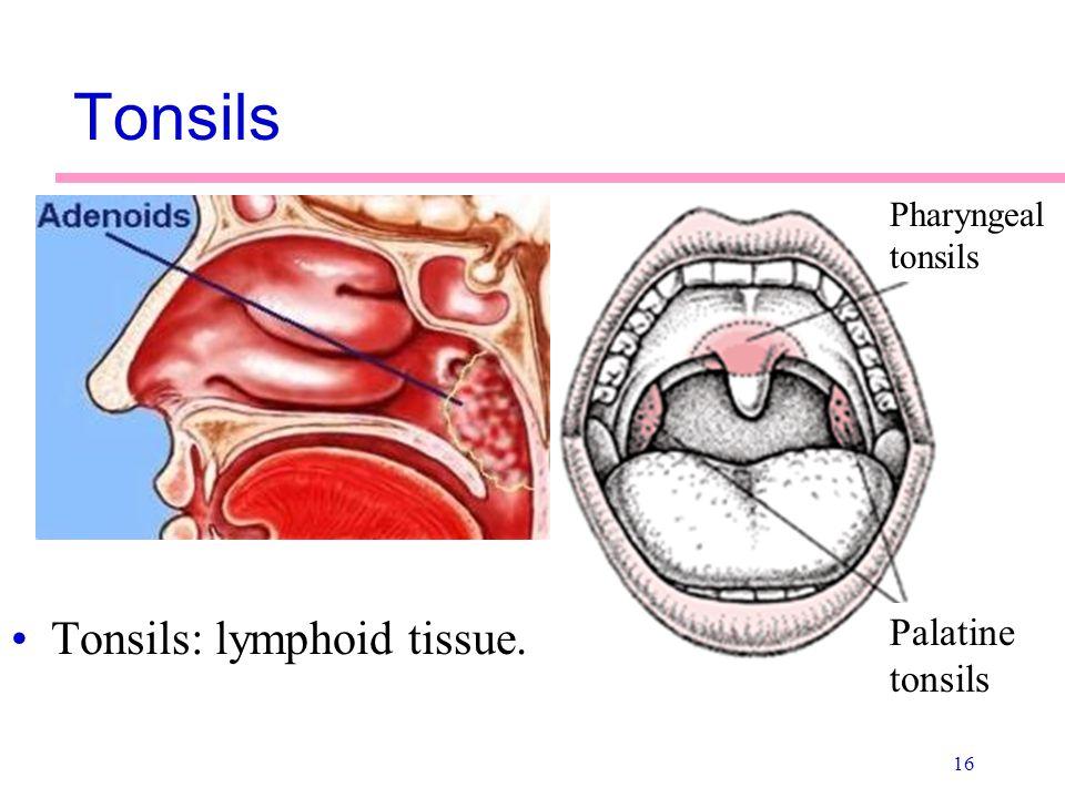 Adenoids tonsils adult