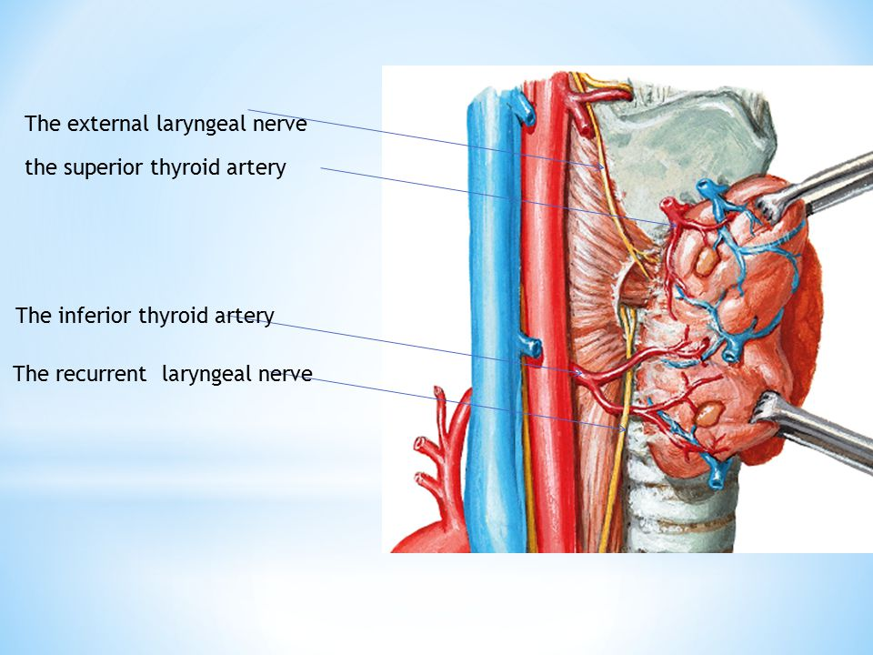 The larynx Dr. Ayat El-Domouky. - ppt video online download