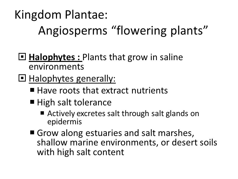 Marine Plants Producers Ppt Video Online Download