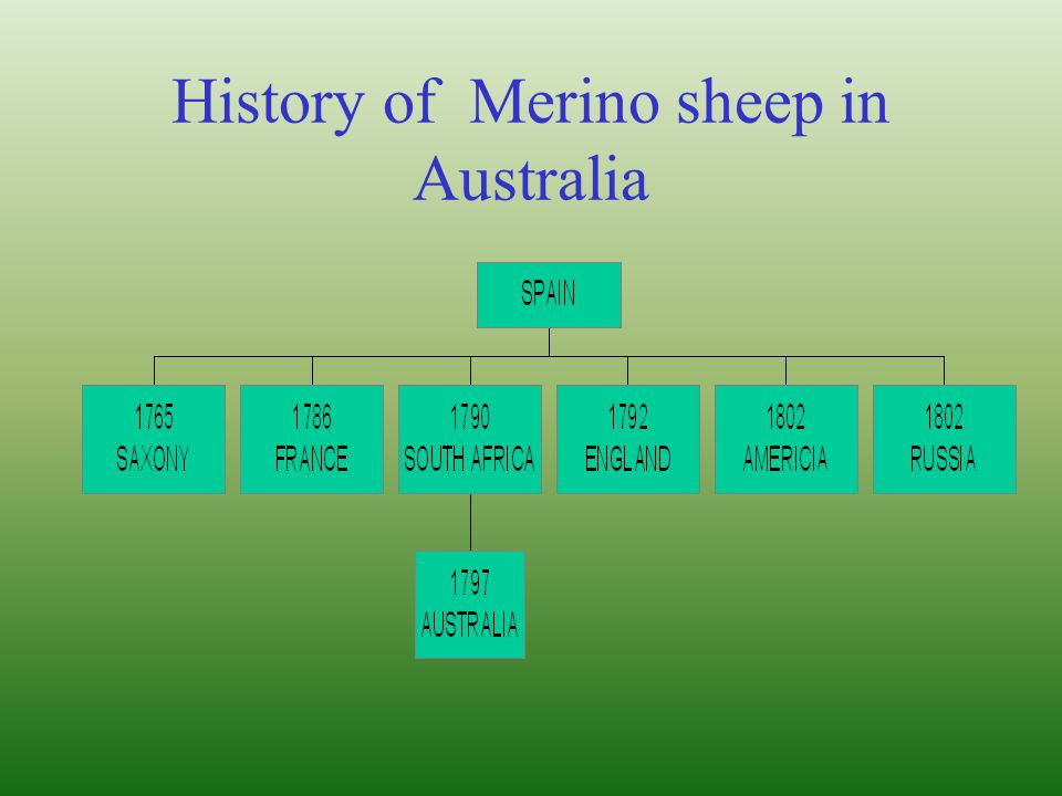 Sheep management and production ppt video online download - Merinos cross system ...