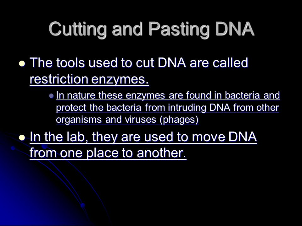 Cutting and Pasting DNA