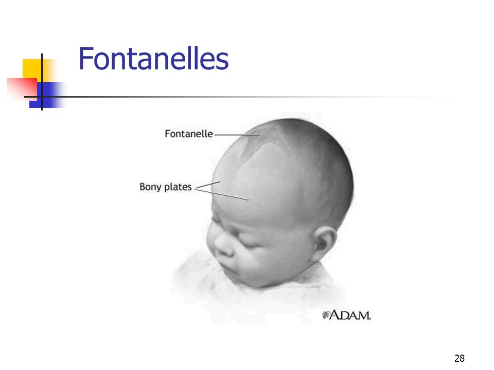 Growth And Development The Newborn Baby Ppt Video Online Download