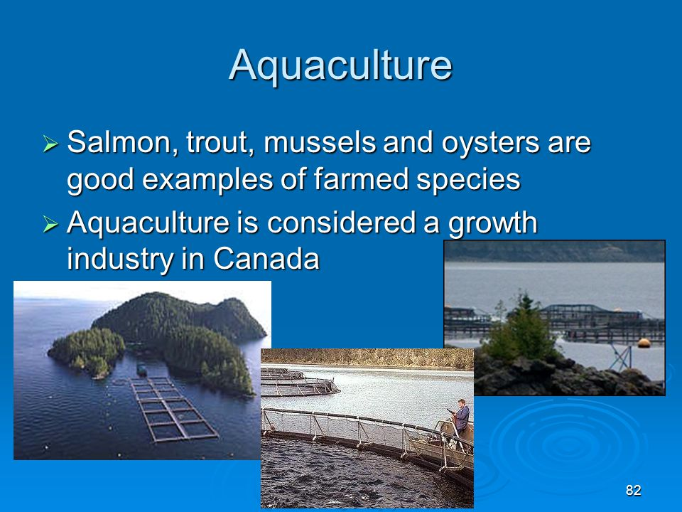 Canadian Geography 1202 Fisheries – Chapter ppt download