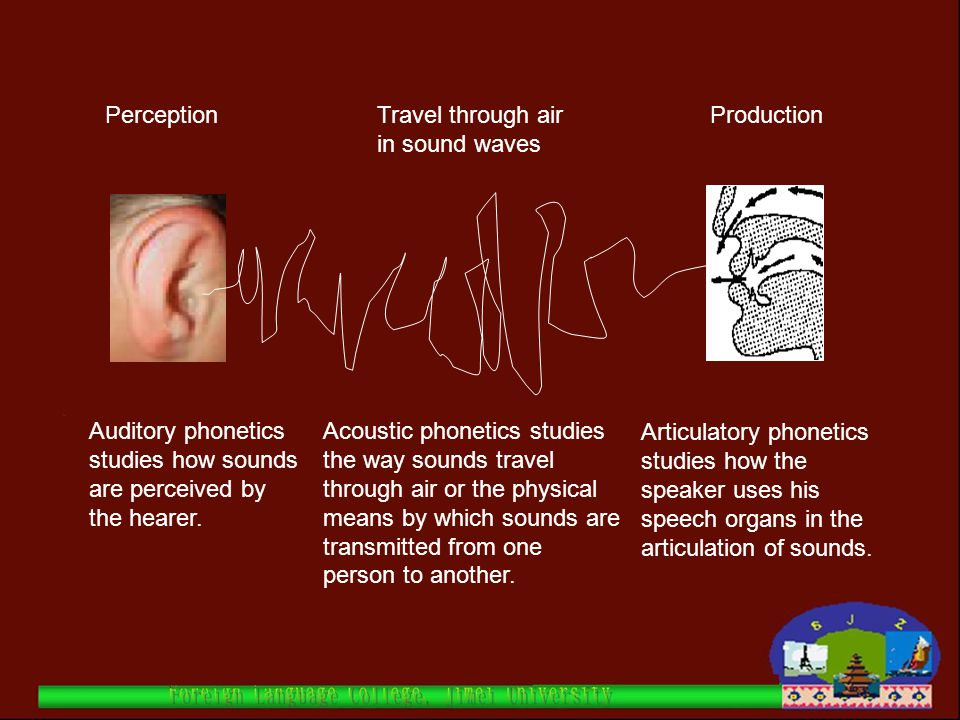 Perception Travel through air in sound waves. Production. Auditory phonetics studies how sounds are perceived by the hearer.