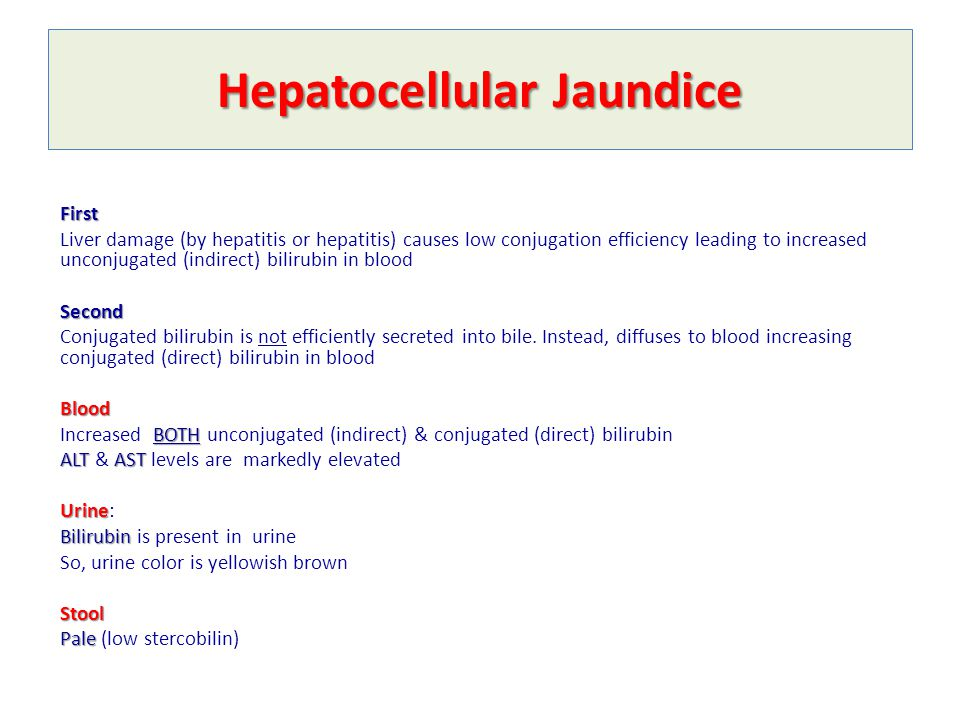 bilirubin metabolism amp jaundice ppt video online download