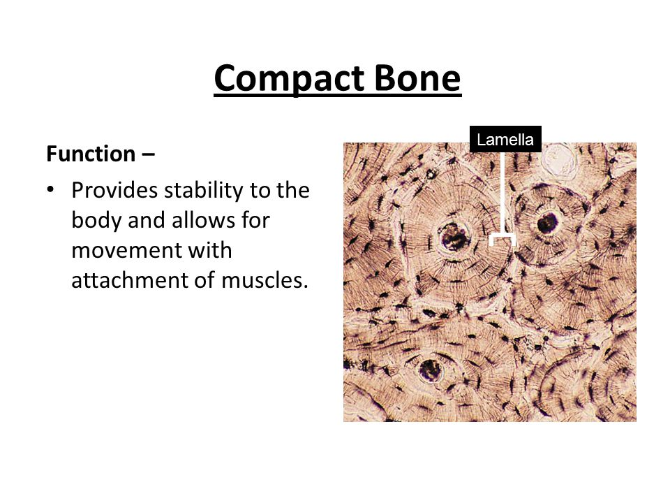 Histology 2 – Connective Tissue - ppt video online download