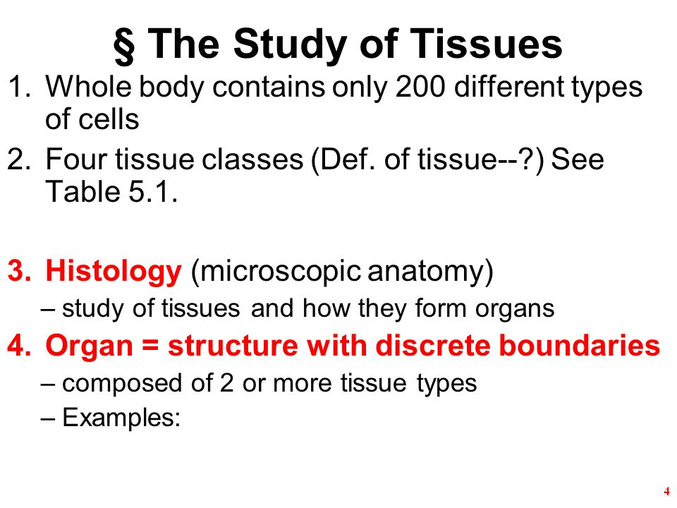 Chapter 5-- Histology (microscopic anatomy) - ppt video online download