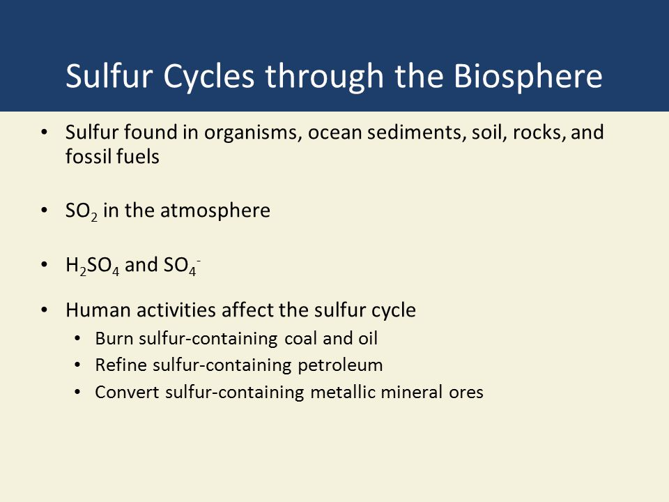 Sulfur Cycles through the Biosphere