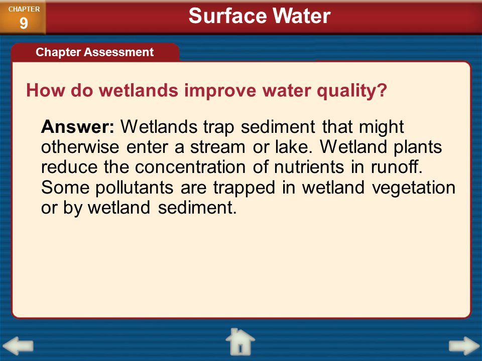Surface Water How do wetlands improve water quality