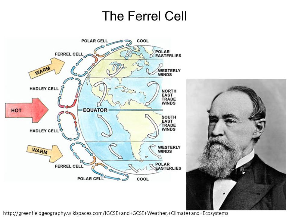 The Ferrel Cell