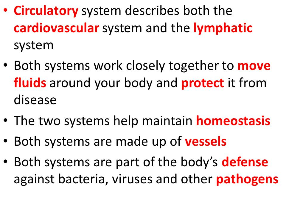 Circulatory system describes both the cardiovascular system and the lymphatic system
