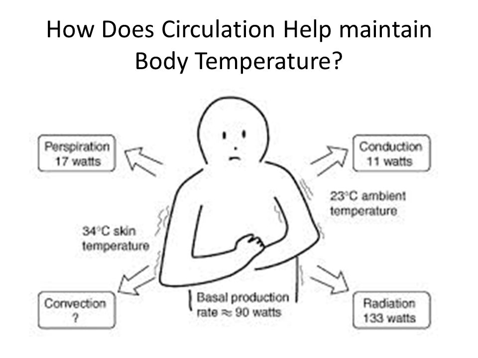 How Does Circulation Help maintain Body Temperature