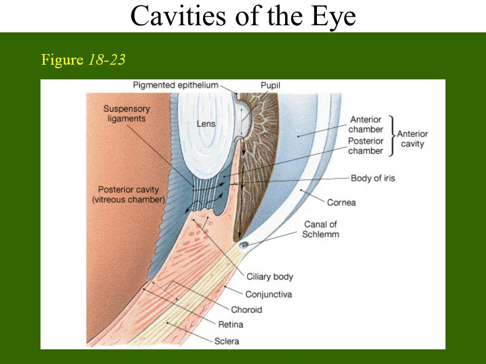 Cavities of the Eye