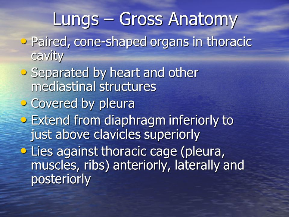 Lung anatomy ppt