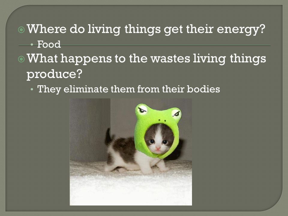 Where do living things get their energy