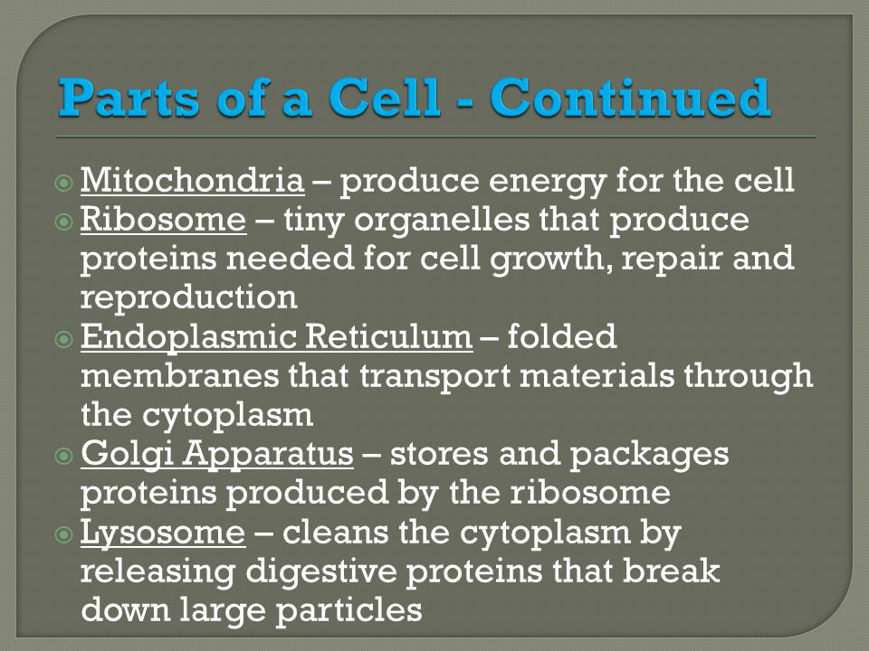 Parts of a Cell - Continued