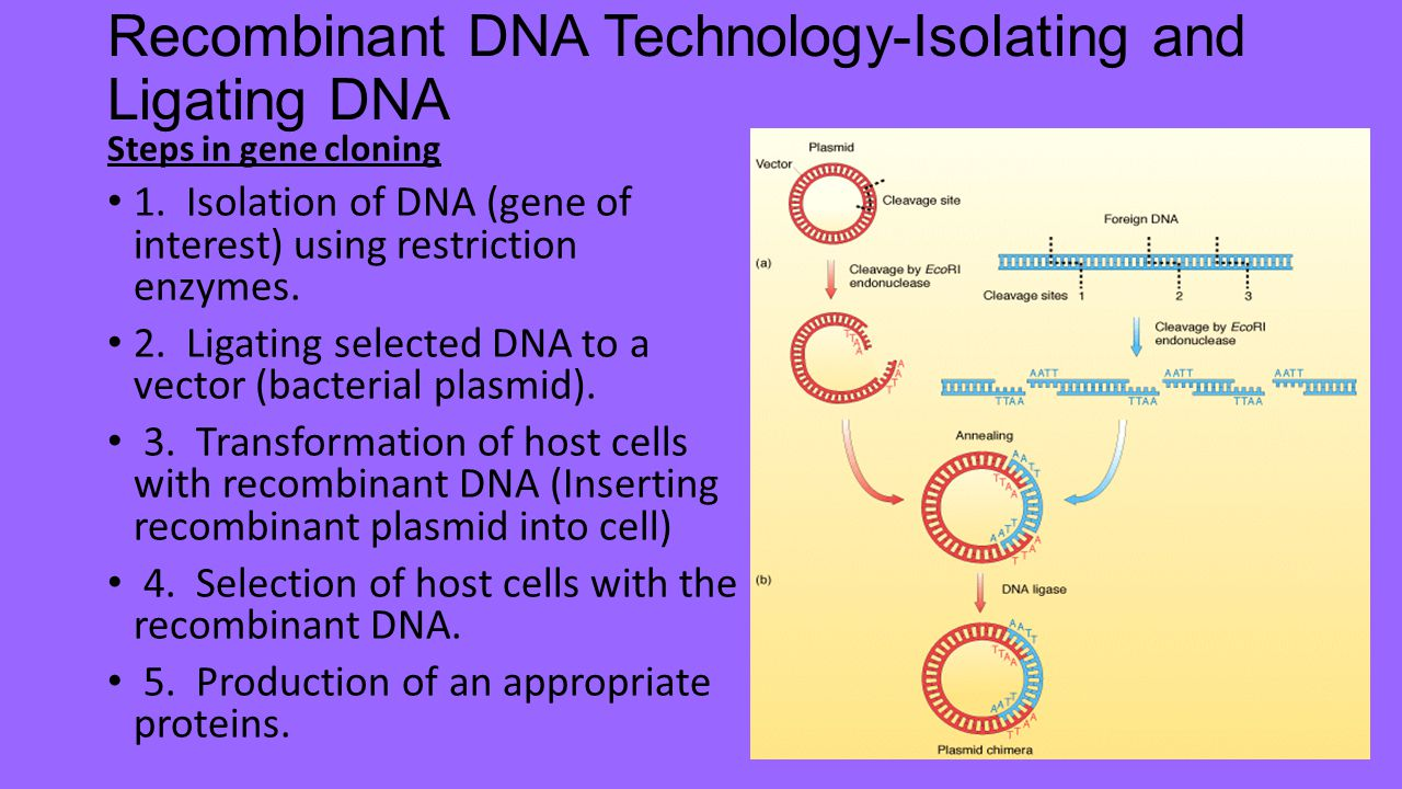 Recombinant DNA Technology-Isolating and Ligating DNA