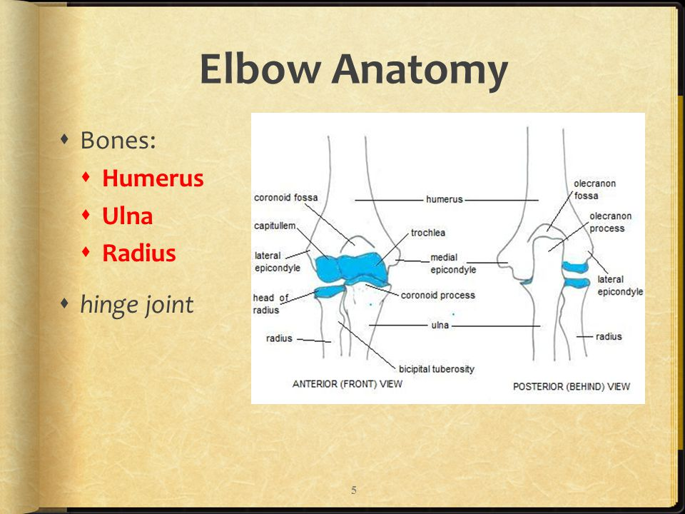 Bellwork List Various Injuries To The Elbow Wrist Or Hand Ppt