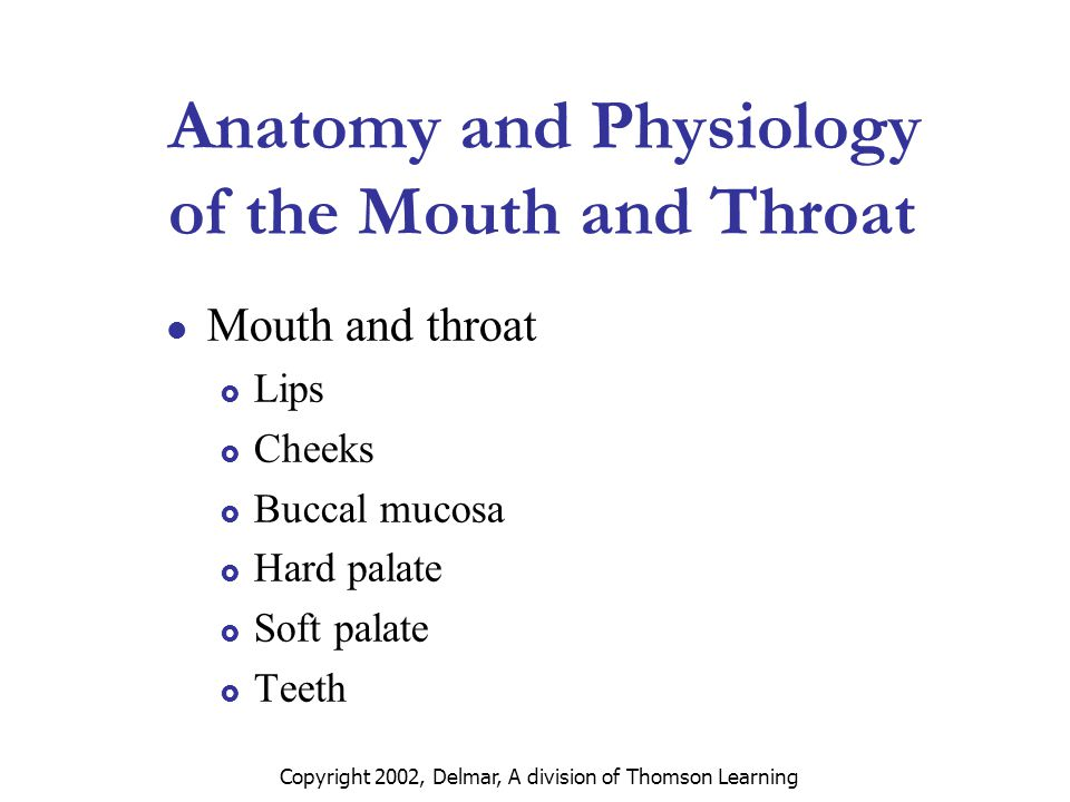 Fantástico Anatomy And Physiology Of Mouth Imagen - Imágenes de ...