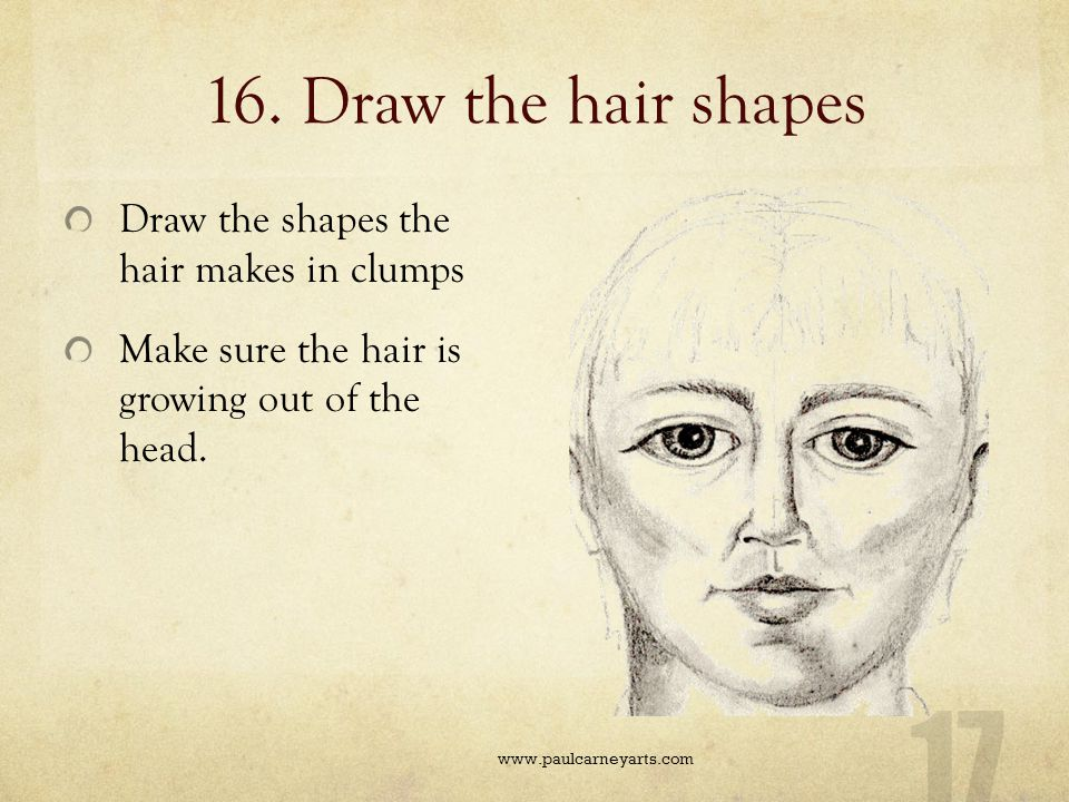 16. Draw the hair shapes Draw the shapes the hair makes in clumps