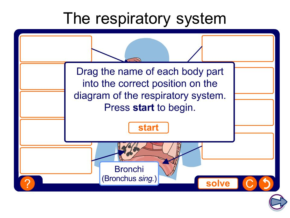 Gcse physical education ppt video online download 3 the respiratory system ccuart Images