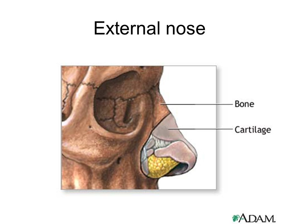Nose And Paranasal Sinuses Ppt Video Online Download