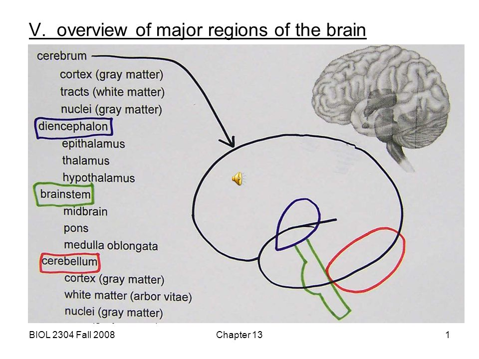 V. overview of major regions of the brain