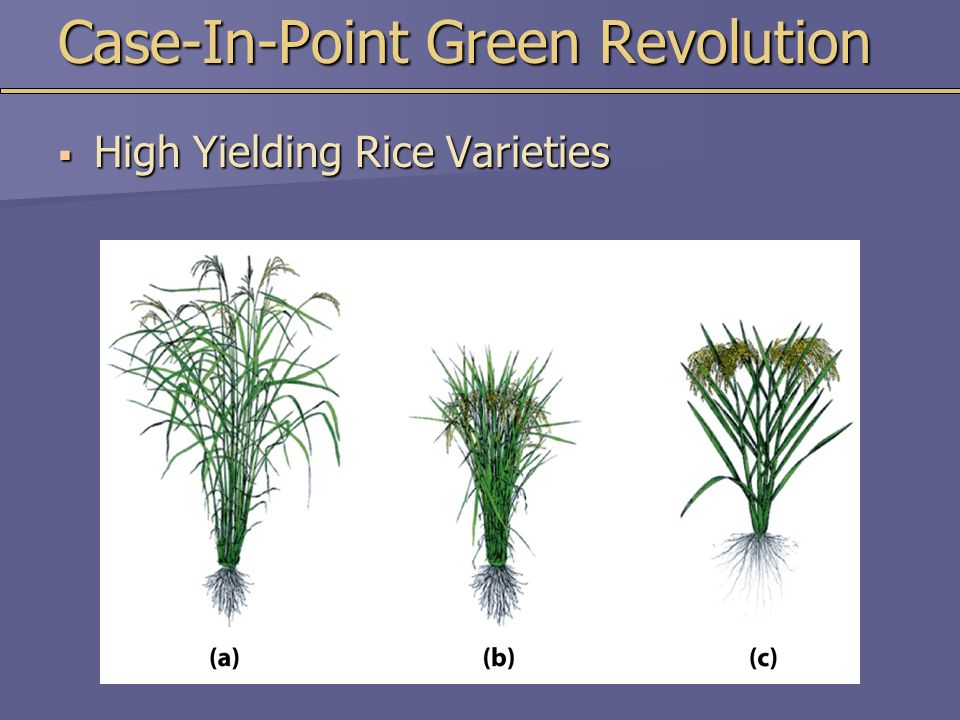 Case-In-Point Green Revolution