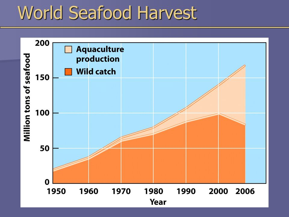 World Seafood Harvest