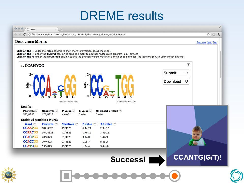 DREME results Success! CCANTG(G/T)!