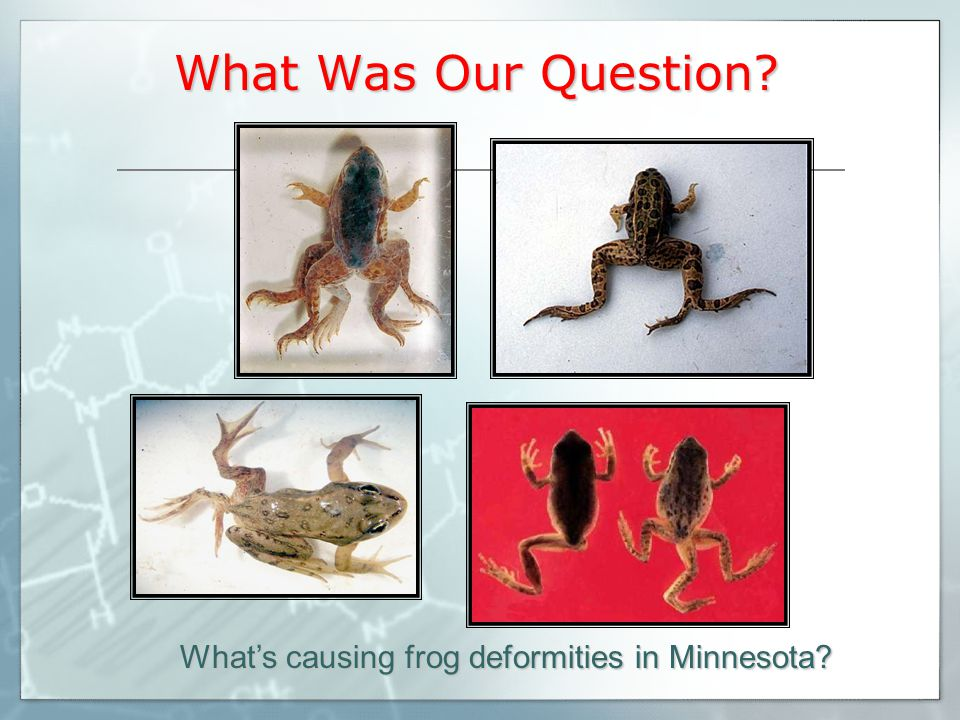 What Was Our Question What's causing frog deformities in Minnesota