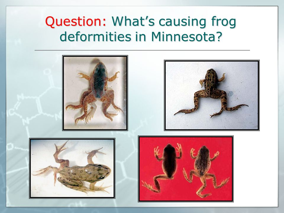 Question: What's causing frog deformities in Minnesota