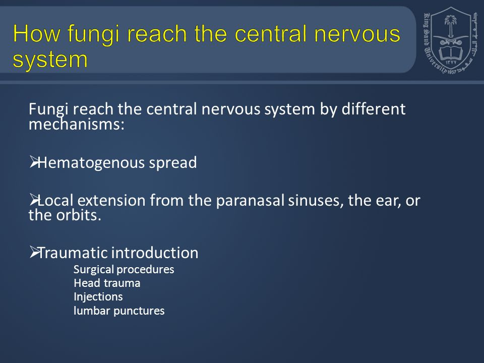 How fungi reach the central nervous system