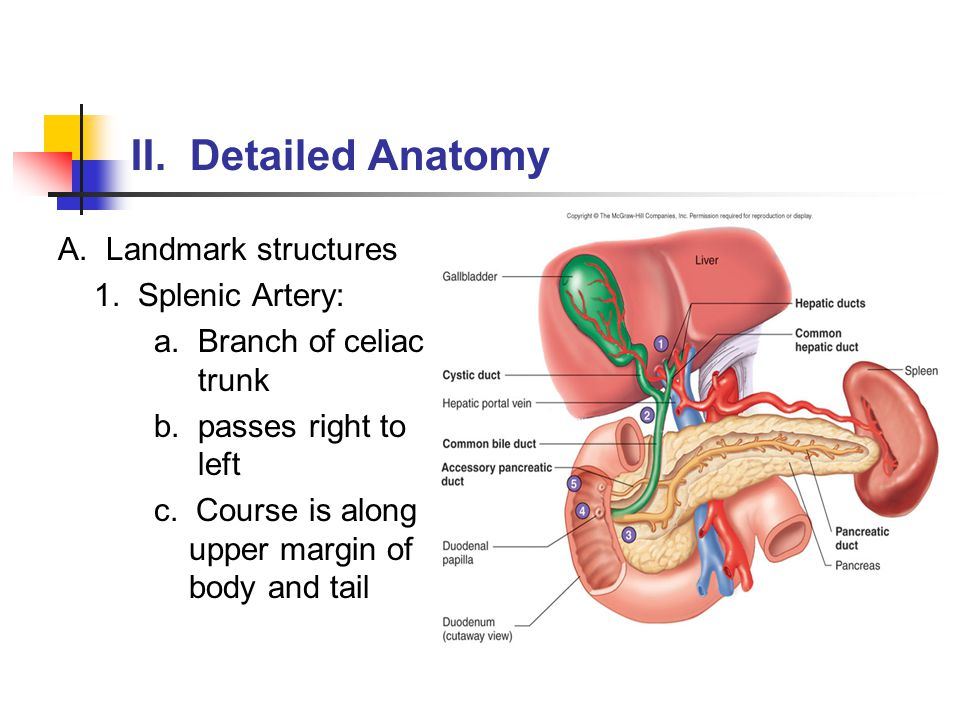 The Pancreas Ppt Video Online Download