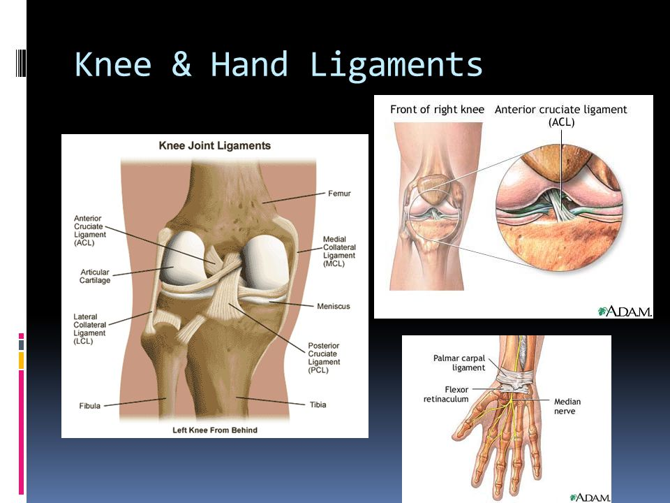 Synovial Joints Tendon and Ligaments Knee & Hand ligament - ppt download