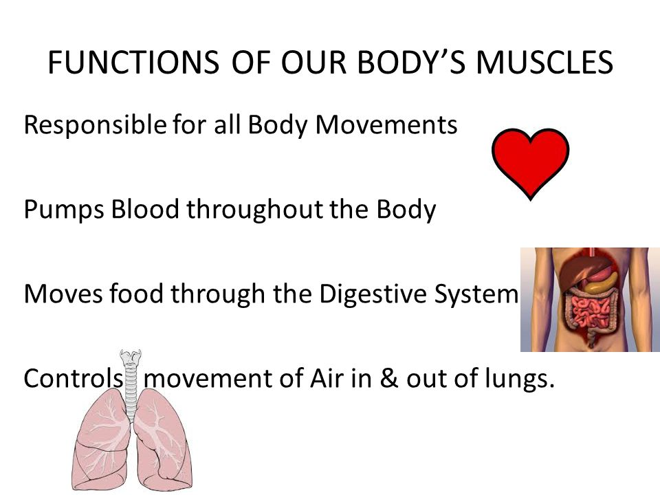 Famous Anatomy Of Care Picture Collection - Anatomy And Physiology ...