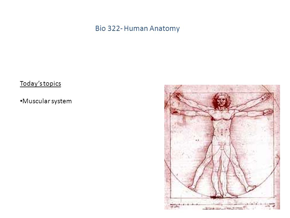 Bio 322 Human Anatomy Todays Topics Muscular System Ppt Download