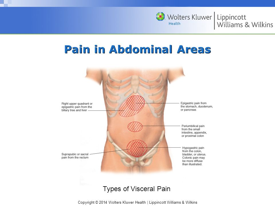 Chapter 11 The Abdomen. - ppt video online download