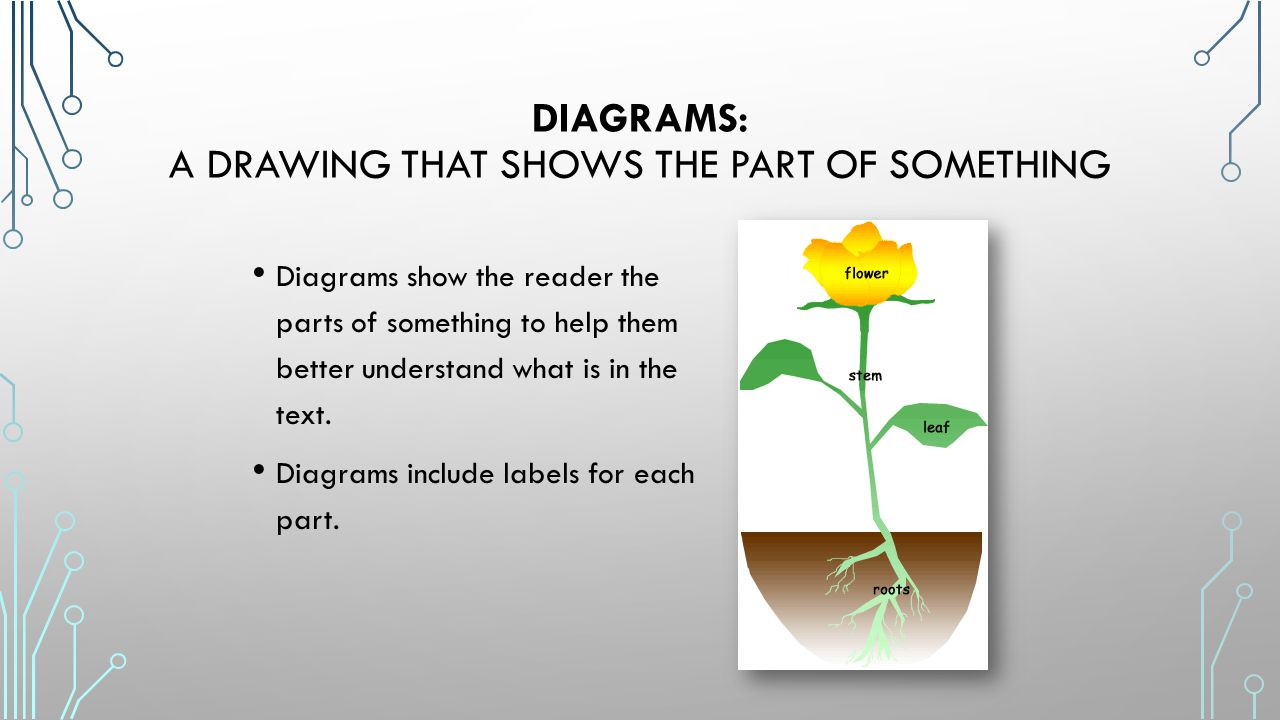 Diagrams: a drawing that shows the part of something