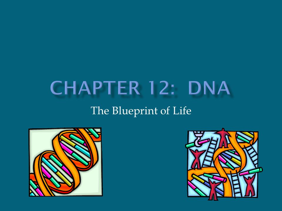 Chapter 12 dna the blueprint of life ppt download 1 chapter 12 dna the blueprint of life malvernweather Image collections
