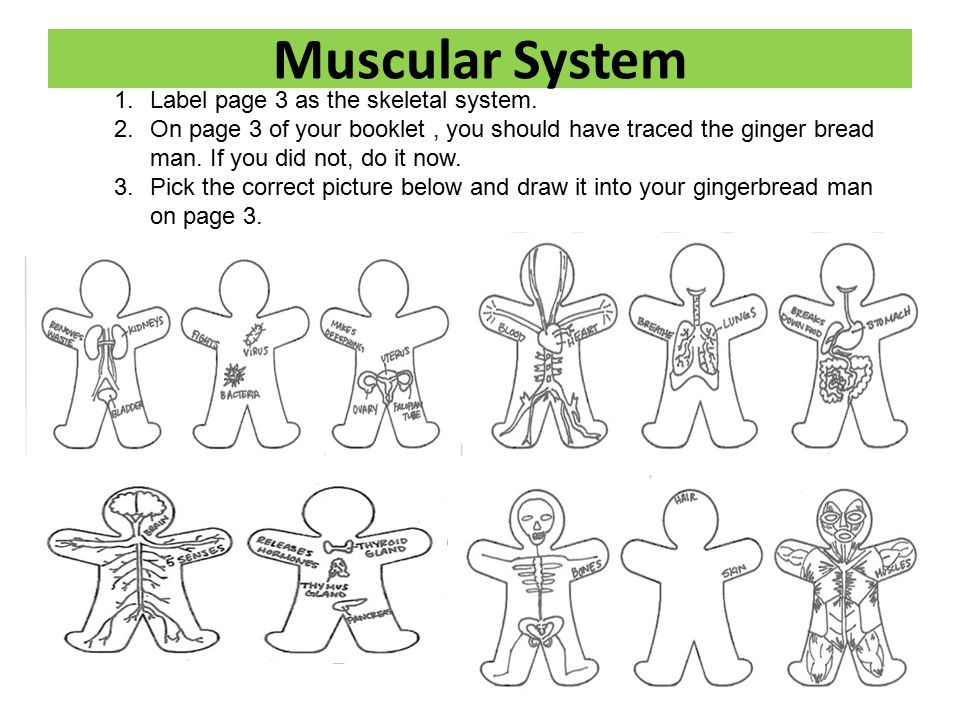 Human Body Systems Booklet Ppt Video Online Download