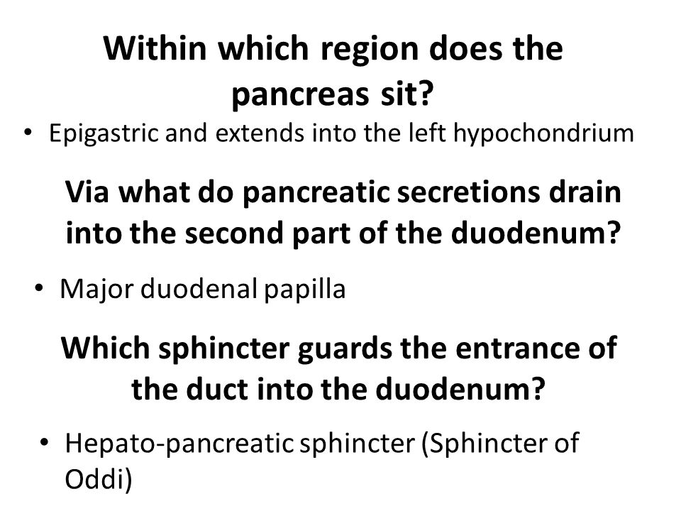 Within which region does the pancreas sit