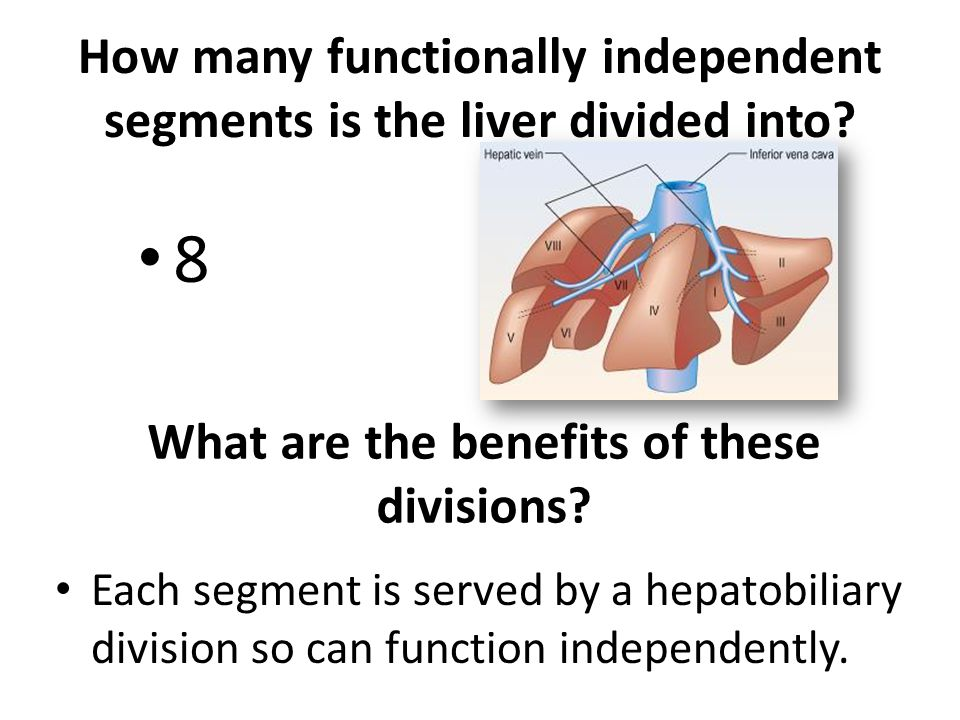 How many functionally independent segments is the liver divided into