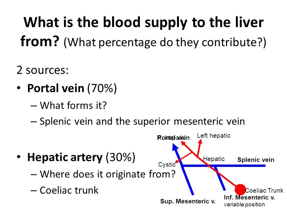 What is the blood supply to the liver from