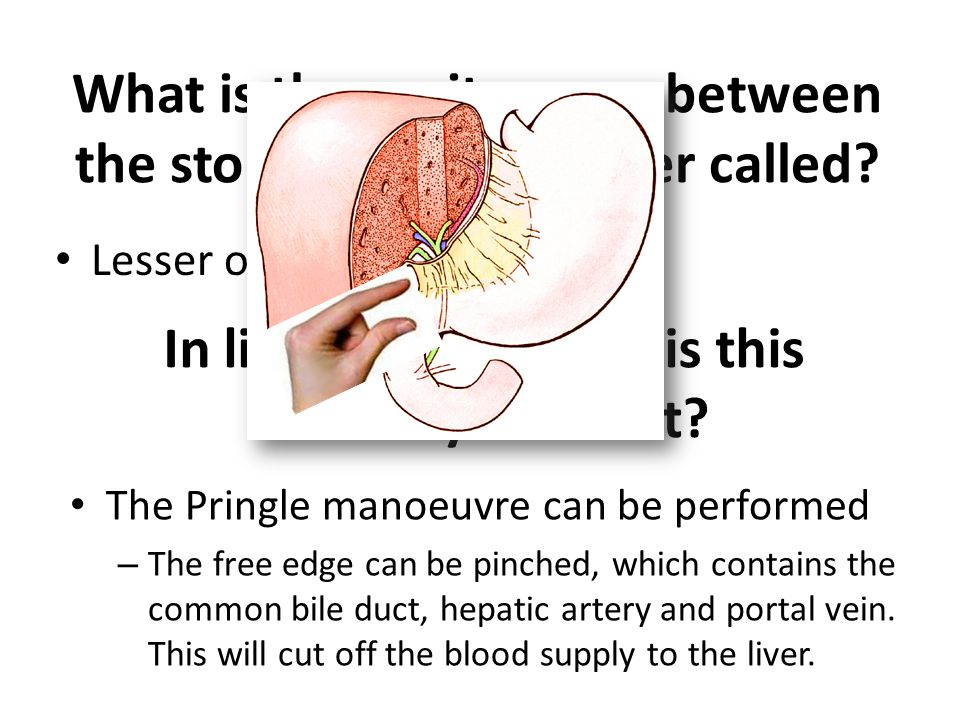 What is the peritoneum between the stomach and the liver called