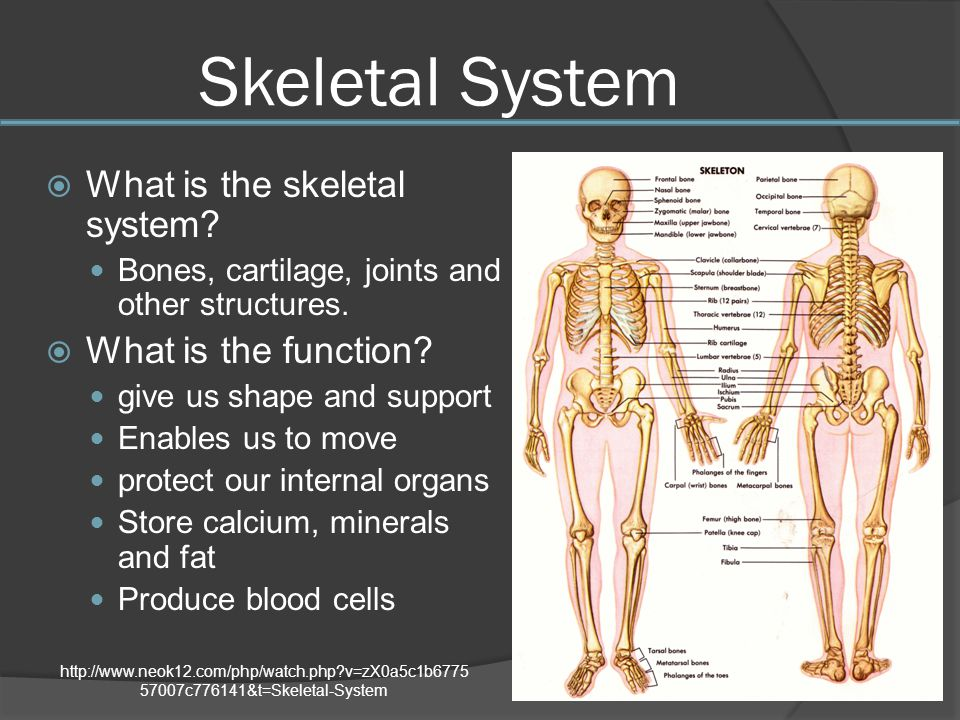 Human Body Systems Create by Mrs. Herman ppt video online download