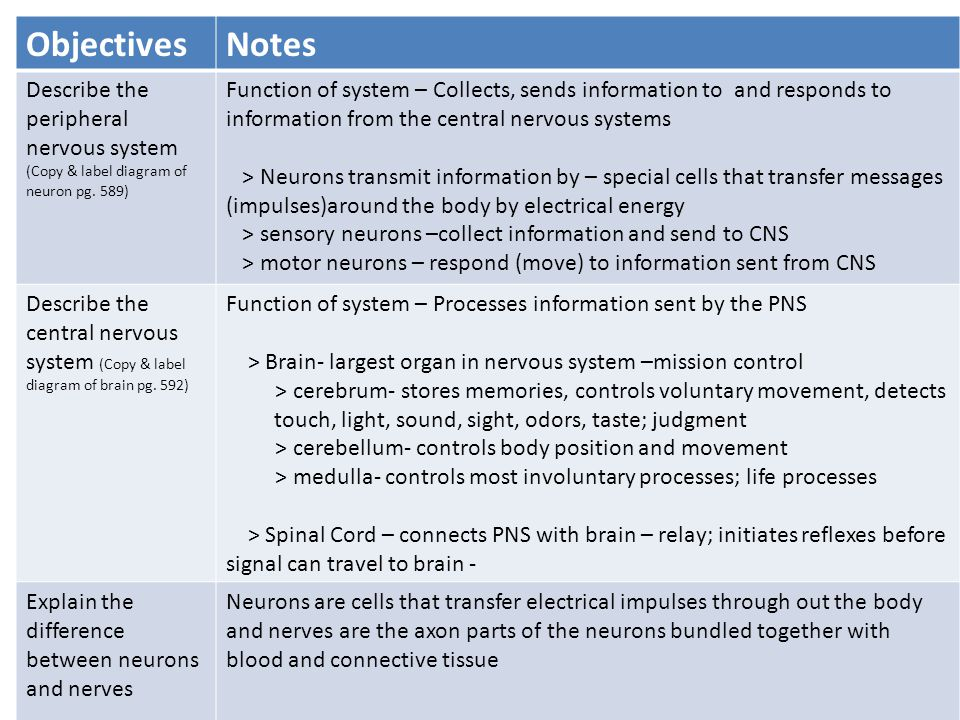 The nervous system ppt download objectives notes describe the peripheral nervous system ccuart Choice Image